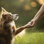 Запрет  изъятия  животных за долги